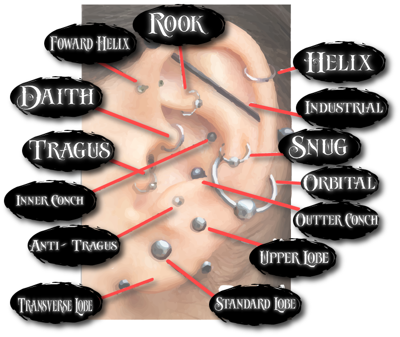 Modern Body Art Piercing Prices